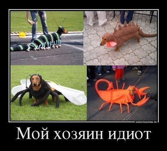 http://cs304705.vk.me/v304705014/569a/JoUXmN3fTX4.jpg