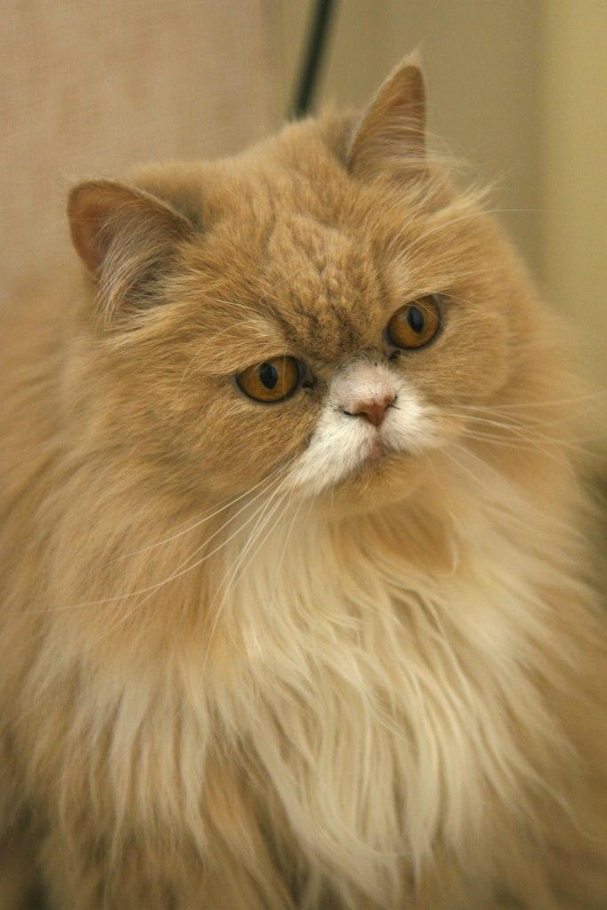 Kitty Yo, Москва - фото №9