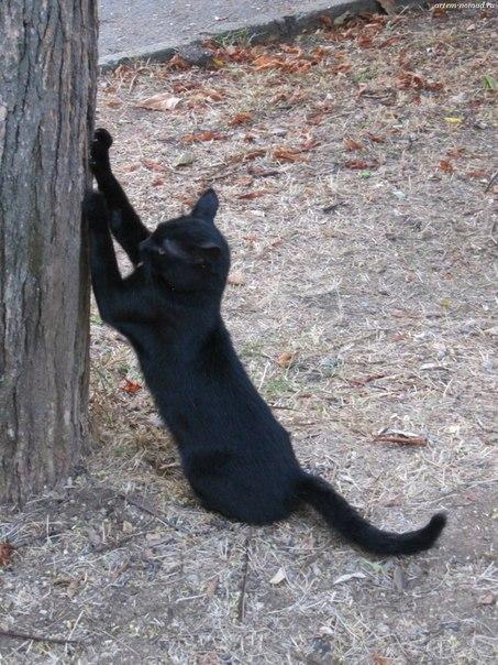 Кот... или Кошка