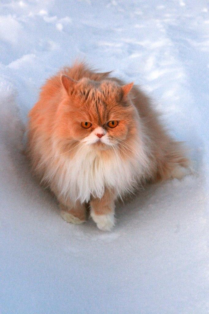 Kitty Yo, Москва - фото №8
