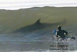 Дикая природа.  Угроза нападения акулы- вполне реальная.