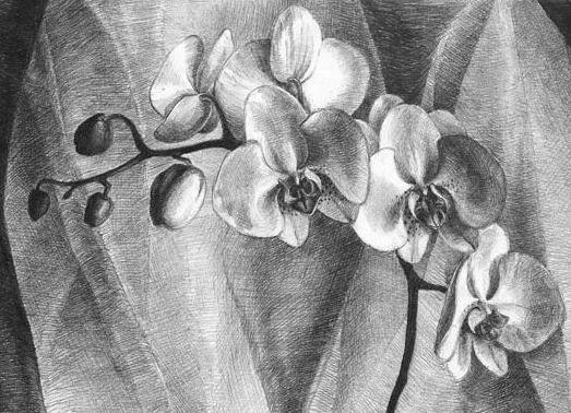 рисунок цветка простым карандашом - рисунки.