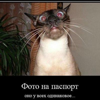 Валерий Воронько, 15 ноября 1984, Калининград, id212328523