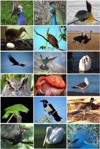 Изначально строение тела птиц приспособлено к полёту
