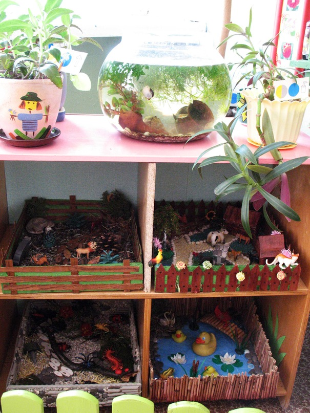 Уголок живой природы в детском саду картинки