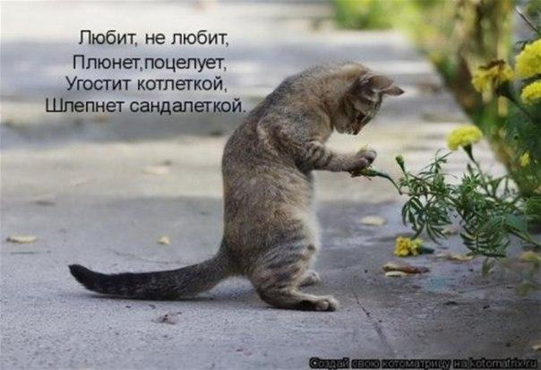 http://cs304807.vk.me/u161375815/-14/x_e0097a16.jpg