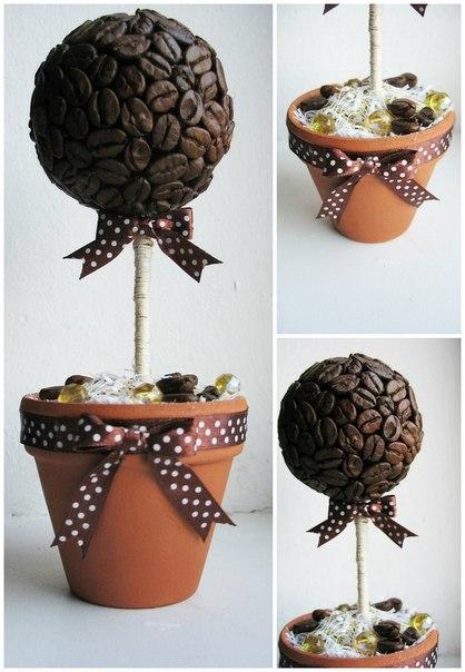 Кофейное дерево из зерна в домашних условиях 720