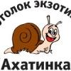 Ugolok-Ekzotiki Akhatinka