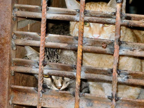 Нашествие крыс в Москве - чем они опасны для человека