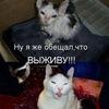 Поможем котам и псам!