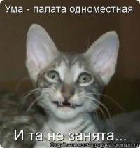 кошек