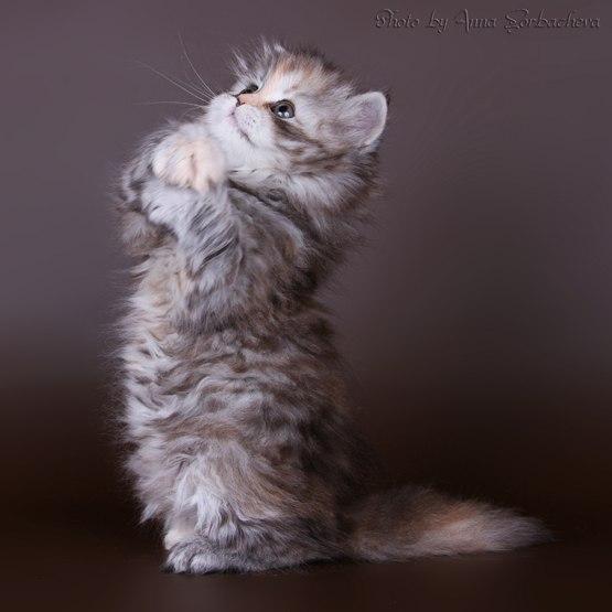 Картинки кошек с надписью прости меня