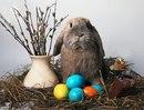 Обои солома, яйца, свеча, верба, пасха, кролик на рабочий стол.