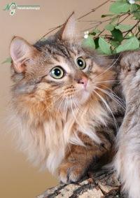 Найти кошку для кота в спб