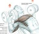 Упражнения для прироста мышечной массы (схемы) .