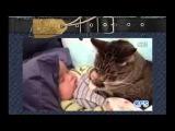Супер смешные и милые кошки и дети!)Лови улыбку)  Угарный ржач! Подборка приколов с животными