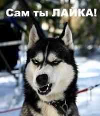 Вольеры для собак фото фото