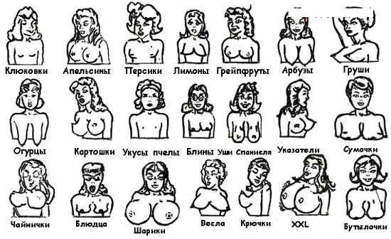 Разные формы женской груди фото