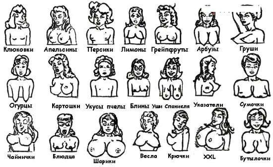 Фото классификации женских жоп фото 343-349