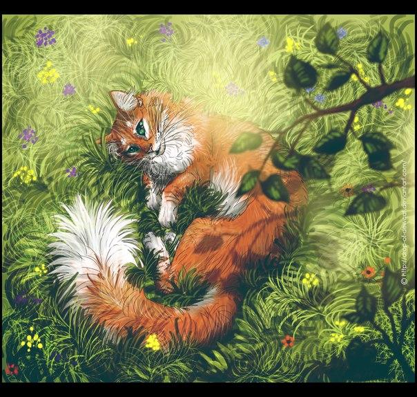 Коты воители картинки самые красивые - e