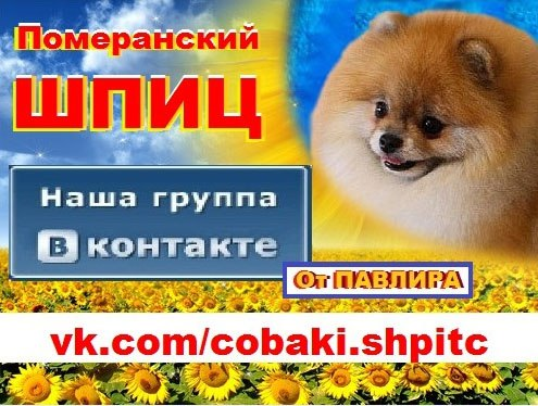 авито сергиев посад недвижимость квартиры