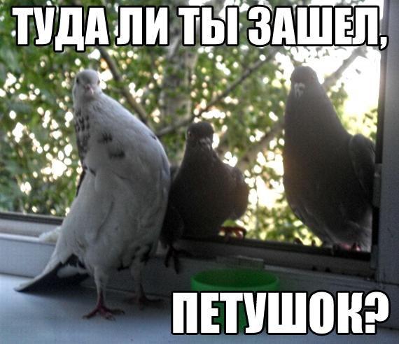 JmYUGAQ0iSs.jpg