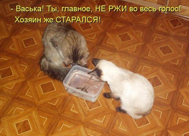 http://cs305409.vk.me/v305409041/3d75/FRiWxfSi3RA.jpg