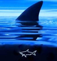 Shark Shark, 23 июля 1976, Санкт-Петербург, id222456819