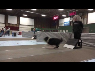 Spring Wing Ding 2013 Flyball Tournament