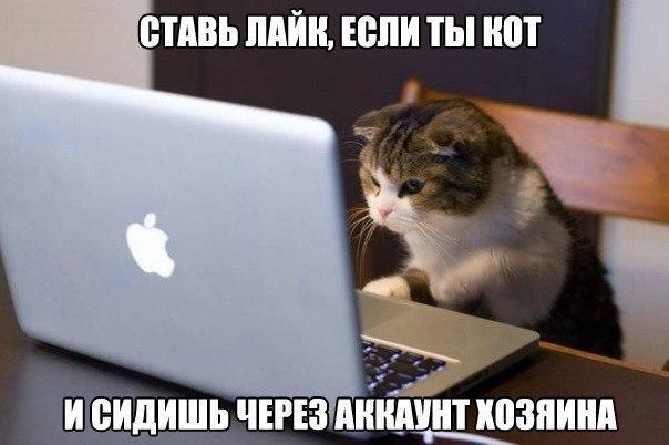 Ставь лайк, если ты кот