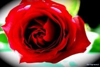 аптеки астаны эрекция после семяизвержения простатит симптомы лечение астеноспермия нсп 02 100 003 фото женских...