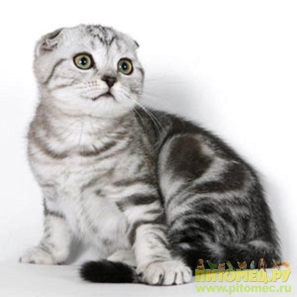 Объявления о продаже покупке котенка размещаются в специально отведенной