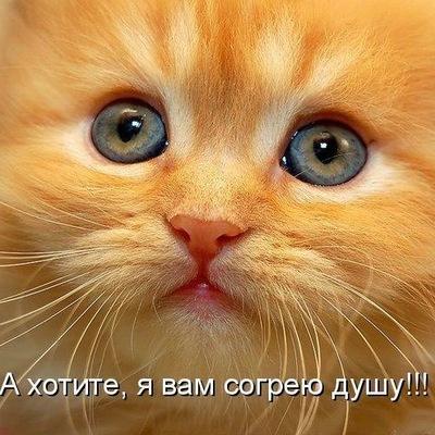Катя Артемчук, 2 марта 1984, Новодвинск, id189460847