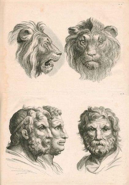 Варианты эволюции