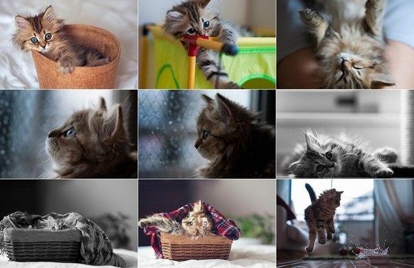 Наши кошки  K5gtR8Nvi3s