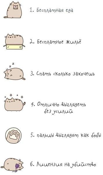 Пять причин быть котом