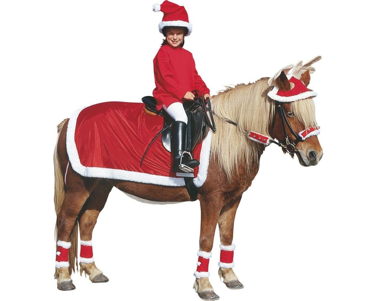 крема наряды для лошадей в картинках того, что