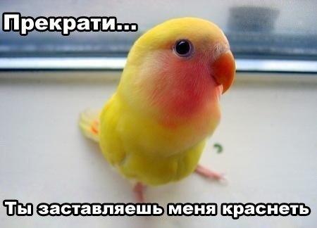 http://cs305601.userapi.com/v305601581/1498/Ors0R0n-fZY.jpg