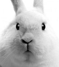 Белый Кролик, 14 марта 1993, Москва, id156875847