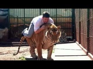Бразилец поселил в своем доме девять бенгальских тигров - Первый канал
