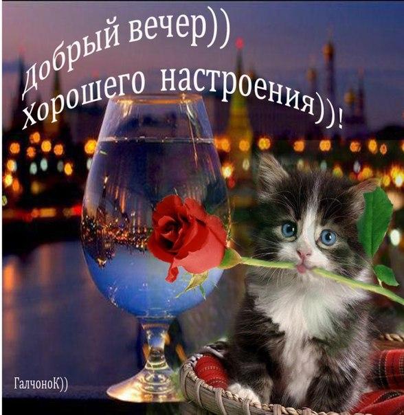 http://cs305607.vk.me/v305607782/60c1/EtHmgqfwqxk.jpg