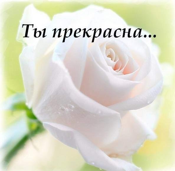 http://cs305607.vk.me/v305607782/73f0/w06PpYstVKI.jpg