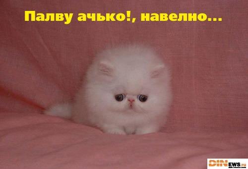 http://cs305701.vkontakte.ru/u13221116/-6/x_305ec218.jpg