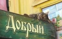 Максим Ололо, 18 января 1996, Новосибирск, id180902660