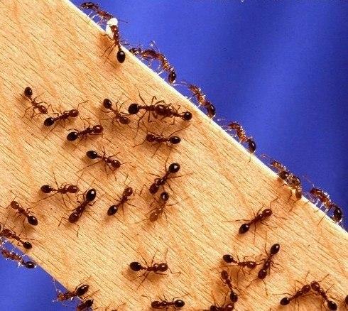 Тепло, весна, лето, появляются насекомые, а среди них и муравьи.