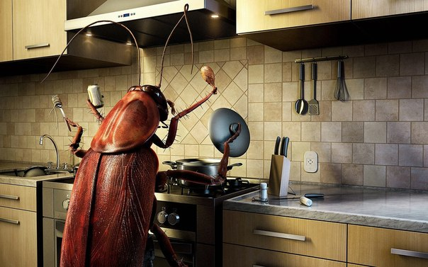 1 Уничтожение клопов, тараканов, муравьев, блох, моли.