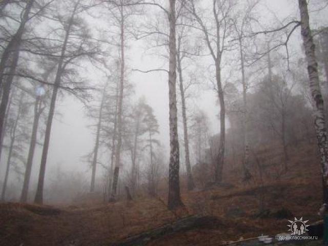 Утро в лесу (11.12.2013)
