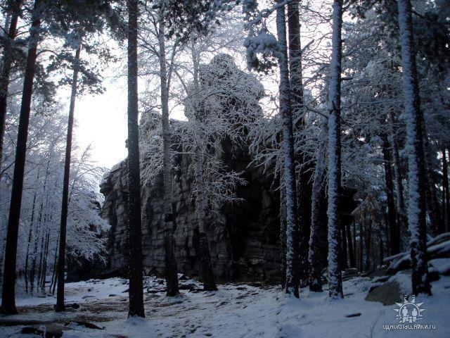 Зимний лес (11.12.2013)