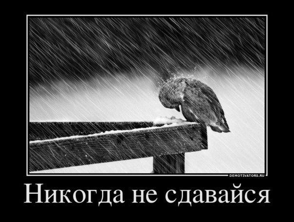 Успел отступить сибирская язва фото больных лукаво улыбнулся сказал: