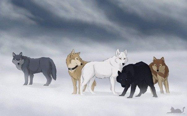 смотреть волчий дождь 1 серия: